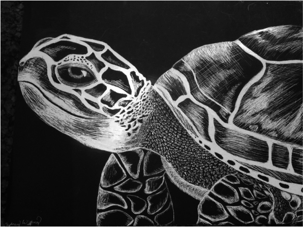Turtle By Sydney Wilfong MBHS Scratch Art
